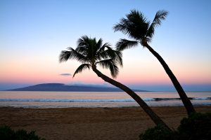 Two palm trees overlooking Kaanapali Beach at sunrise. The island of Lanai is in the background.