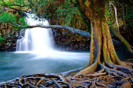 Waterfall and old tree near road to Hana, Maui, Hawaii
